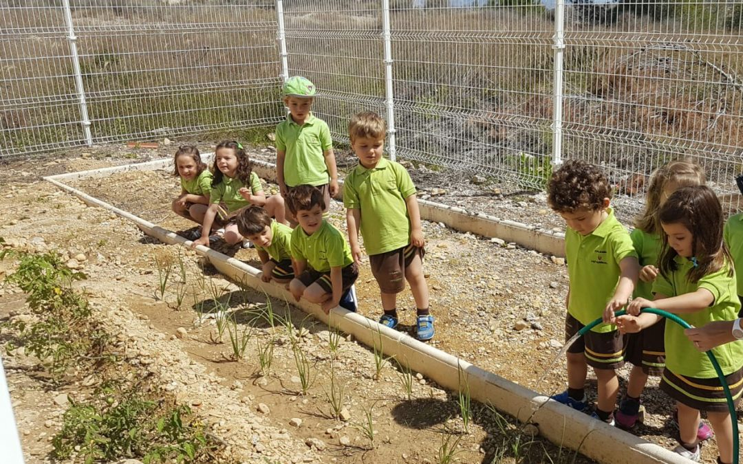 Vistarreal School Eco-Garden